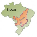 Brazillian Cerrado – Direct Trade